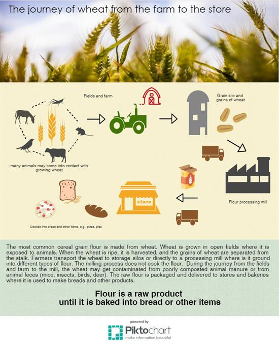 Journey of wheat from farm to store infographic